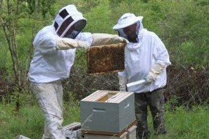 Visite de la première ruchette. abe1-300x200